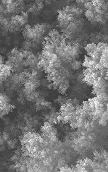 Snímek připravených uhlíkových depozitů.