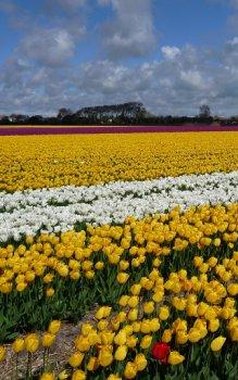 Flevoland, Netherlands.