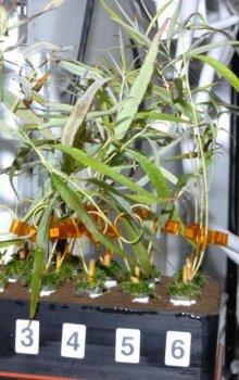 Rostliny pěstované na ISS sloužící k výzkumu kambia.
