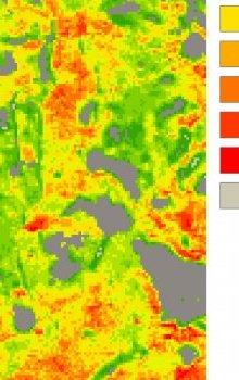 Mapa odhadu obsahu chlorofylu (a+b) ze simulovaných dat Sentinel-2.